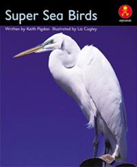 Super Sea Birds