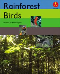 Rain Forest Birds